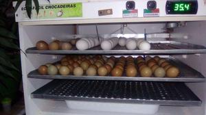 Chocadeira 330 ovos