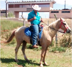 Vendo cavalo baio amarilho meio sangue quarto milha