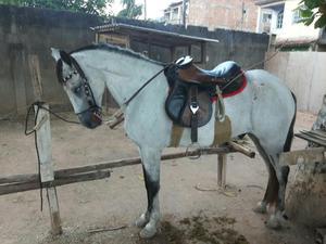 Cavali Mangalarga