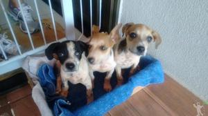 3 filhotes para adoção