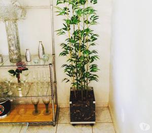 Bambusa 5 Hartes com Cachepot de Vidro