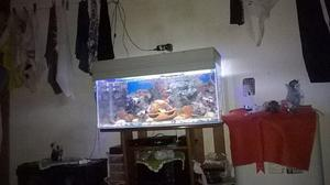 Aquario 600