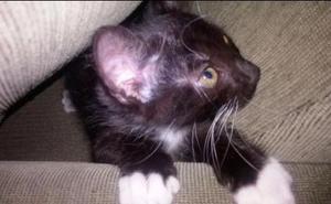 Filhote gato 2 meses