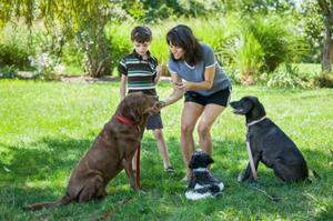 Adestramento de cães - Passo a Passo