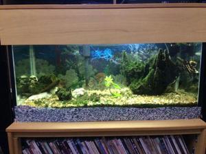 Aquário de 200 litros para peixes