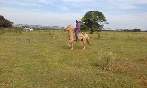 Cavalo baio manga larga