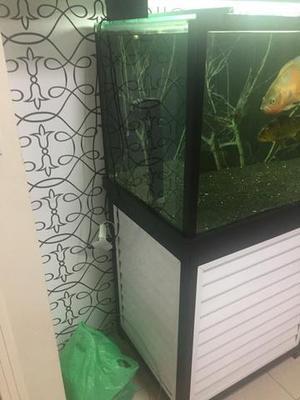 Aquario Peixe