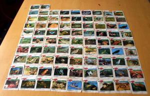 Lote De 83 Figurinhas Ping Pong - Amazônia - Raridade