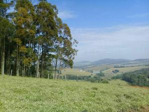 Imperdivel- Terrenos próximo a Bragança!!!