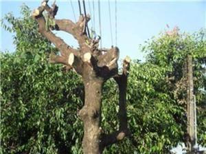 Corte e poda de árvores - todo o Rio