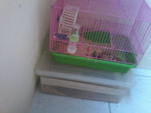 Gaiola + hamster