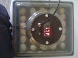 Chocadeira de ovos agrodove 127w