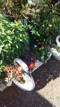 Garden##Sanferflora jardins e paisagens em Londrina - Parana