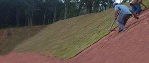 Plantio e comercialização de grama