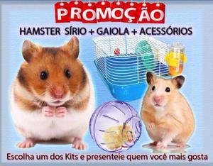 Hamster Sírio Kit com Gaiola, Rodinha e Bebedouro