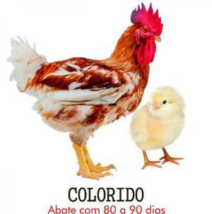 Pintinhos de galinha caipira precoce, caipirão R 2,00