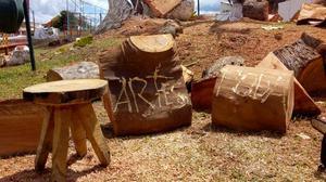 Corte e podas de árvores em geral