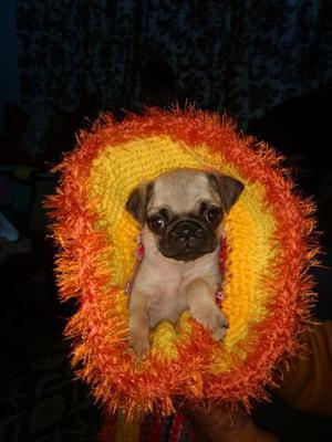 Pug Mini Machinho