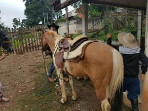 Vendo cavalo pampa