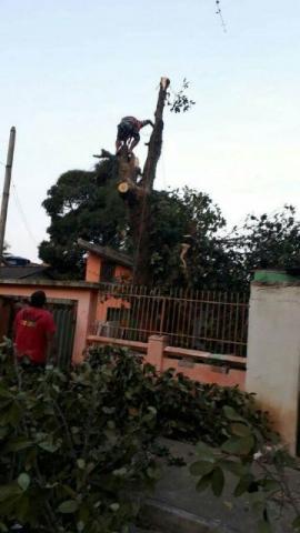 Poda e corte de árvores (todo o Rio)