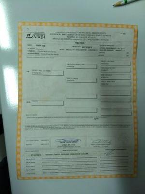 Cavalo quarto de milha registrado na ABQM pronto p/vaquejada