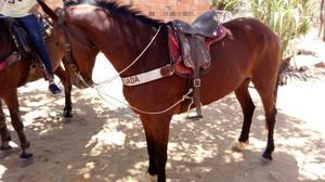 Egua qm com ingles de vaquejada pra troca em cavalo de