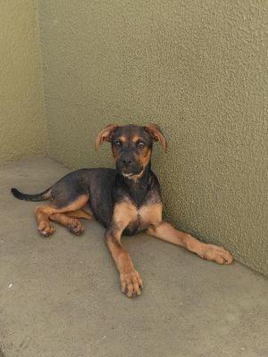 Doação de linda cachorrinha de 3 meses e meio