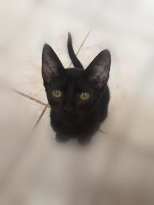 Lindo Gatinho Para Adoção