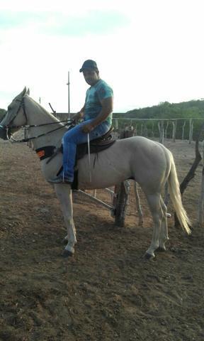Cavalo palumino meio sangue 27.000,00