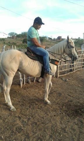 Vendo cavalo palumino meio sangue