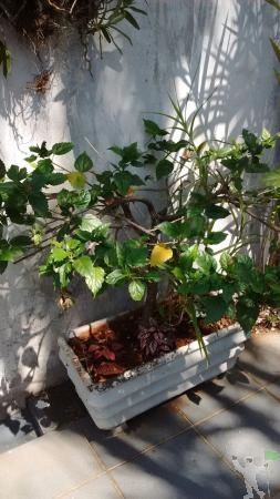 Serviços de Jardinagem e Paisagismo em Londrina, PR -