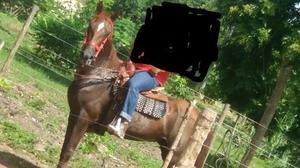 Cavalo Q.m