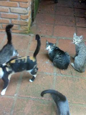 Gatos para doaçao cotia