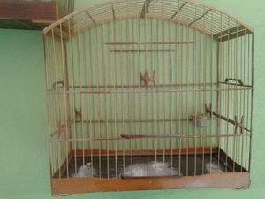 Voadora e gaiola de trinca ferro