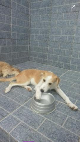 Doação de Ração Para meus Cães