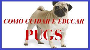 Como Cuidar do Seu Pug - E-book Exclusivo com Passo a Passo