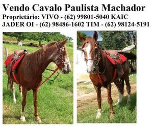 Cavalo Paulista Machado