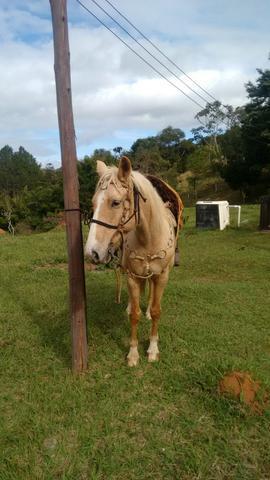 Cavalo baio amarilho