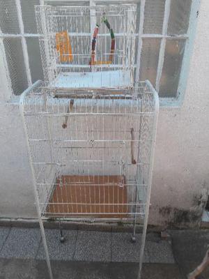 Gaiola de papagaio e gaiola de calopsita