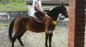 Vende-se cavalo quarto de milha puro sem registro