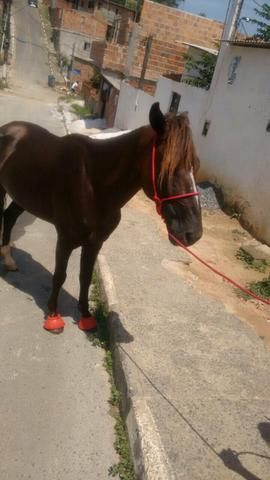 Cavalo M.Paulista de Macha Picada