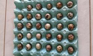 Ovos galados de codorna gigante