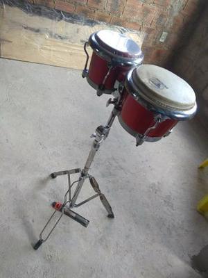 Bongo percussão