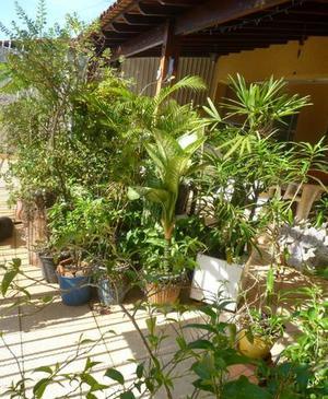 Vendo todo o meu jardim em vaso e mudas com urgencia devido