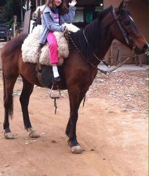 Cavalo crioulo 7 anos
