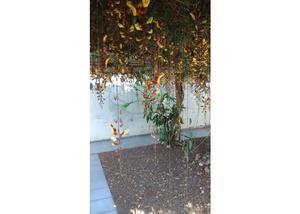 Flores e plantas Comércio de Plantas e Vasos - Londrina -