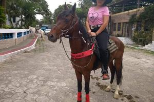 V/T cavalo manga-larga marchador