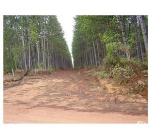 Fazenda área 2.860 ha com 1,4 milhões árvores de Pinus