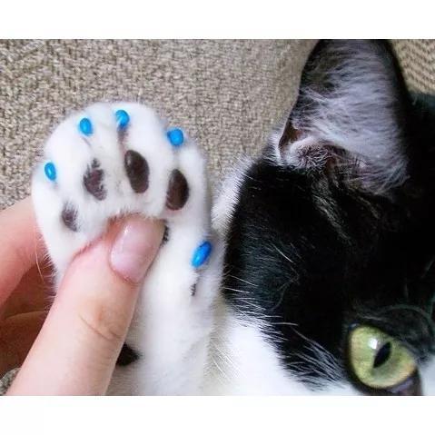 Capa Protetora Gato Unha 20 Unhas Gato + Frete Gratis