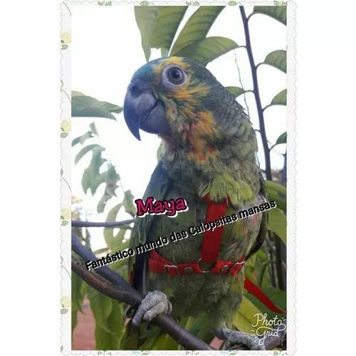 Coleira Guia Peitoral Pra Papagaio